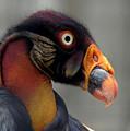 Bird-0056 by Sean Shaw