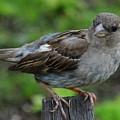 Bird 1 by Virginia Levasseur