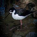 Bird 2 by Reed Tim