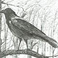 Bird, 2011 by Vincent Alexander Booth