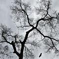 Bird And Tree by Bernd Billmayer