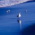 Bird At Ocean's Tide by George Ferrell