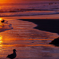 Bird At Sunset by Jill Reger