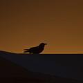 Bird At The Sunrise by Rana Agaoglu