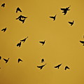 Bird Ballet by Diana Hatcher