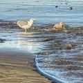Bird Bath by Kristina Rinell