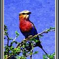 Bird Beauty - No 7 P B With Decorative Ornate Printed Frame. by Gert J Rheeders