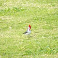 Bird by Bill Judge