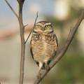 Bird by Cristhian Nogueira