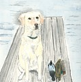 Bird Dog by Sara Stevenson