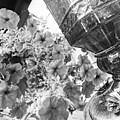 Bird Feeder And Flowers by Korynn Neil