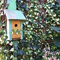 Bird Feeder In Ivy by Melissa Hicks