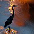 Bird Fishing At Sundown by Williams-Cairns Photography LLC