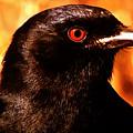 Bird Friend  by Colette V Hera  Guggenheim