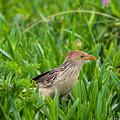Bird by Gabriel Saudades