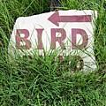 Bird by Gary Richards