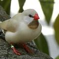 Bird Gazing by Janet Dickinson