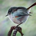 Bird by Georgi Shterev