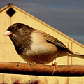 Bird House . 40d11078 by Wingsdomain Art and Photography