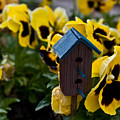 Bird House And Pansies by Douglas Barnett