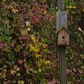 Bird House by Brian Schultz