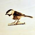 Bird by Ilaria Andreucci