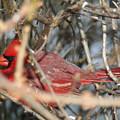 Bird In A Bush by Diane Merkle
