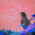 Bird In Abstract by Deborah Napelitano