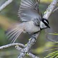 Bird In Action 2 by Ben Upham III