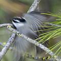 Bird In Action by Ben Upham III