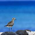 Bird In Blue by Tania Shute