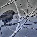 Bird In Digital Blue by Lenore Senior