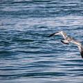 Bird In Flight Over Water by Maxwell Dziku