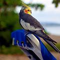 Bird In Paradise by Madeline Ellis