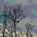 Bird In Tree Silhouette Iv Abstract by Linda Brody