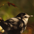 Bird In Tree With Young Leaf by Gary Bartoloni