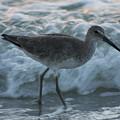 Bird In Waves by Shari Bailey