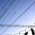 Bird Invasion by Merton Allen
