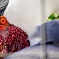 Bird by Joe Yvarra