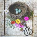 Bird Nest With Blue Bird Eggs Beauty by Anna Louise