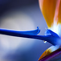 Bird Of Paradise 1 by Terry Davis