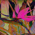 Bird Of Paradise by Barbara Berney