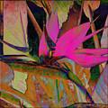 Bird Of Paradise by Barbara Berney