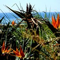 Bird Of Paradise By The Sea by Eve Paludan