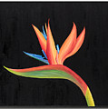 Bird Of Paradise Collection by Sandra Lorant
