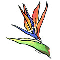 Bird Of Paradise by Diane Thornton