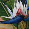 Bird Of Paradise by Dwight Williams