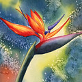 Bird Of Paradise Flower by Hilda Vandergriff