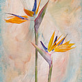 Bird Of Paradise I by Michelle Whitmore