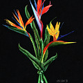 Bird Of Paradise In Black by Peter Piatt